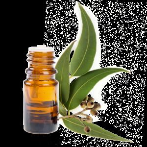 l'Huile Essentielle d'Eucalyptus Utilisation, Bienfaits et préparation